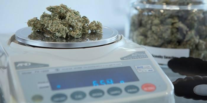 Lékařská marihuana – více než jen THC a CBD