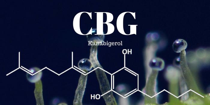 Kanabinoid CBG a CBGA