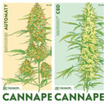 Cannapedia 2019 – Lunární kalendář konopných odrůd ve čtyřech unikátních edicích právě vprodeji
