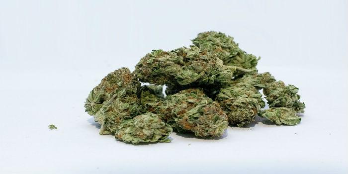 Marihuana pro léčebné účely je opět k dostání v českých lékárnách