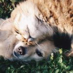 První konopný doplněk stravy pro zvířata